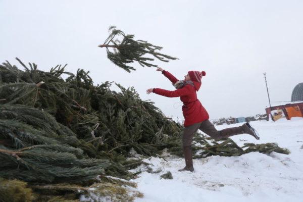 Жители Воскресенского смогут сдать ели для утилизации. Фото: архив