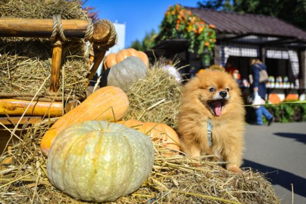 Жители столицы оценят фестиваль «Золотая осень». Фото: архив